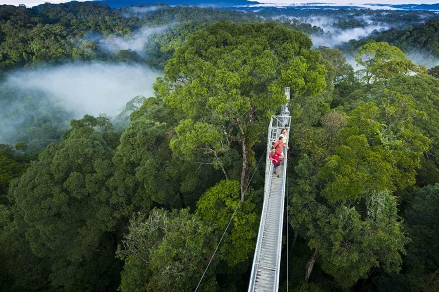 Temburong National Park
