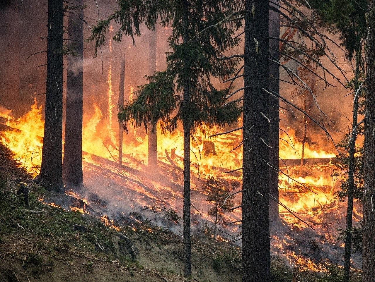 Турция страдает от лесных пожаров