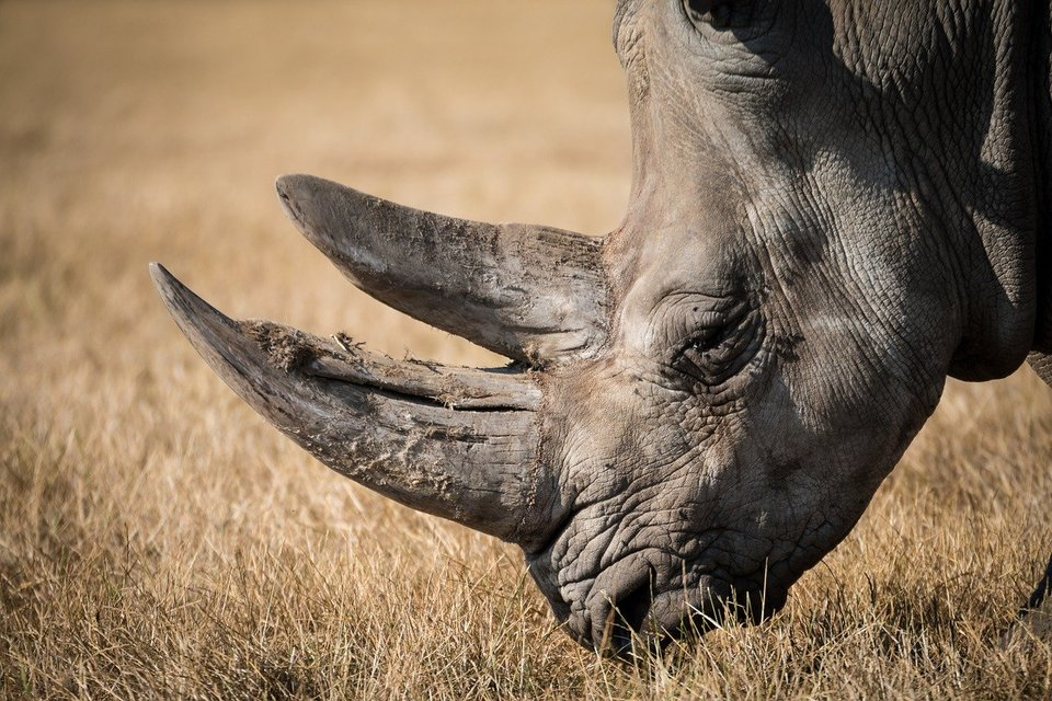 В Крыму нашли кости носорога