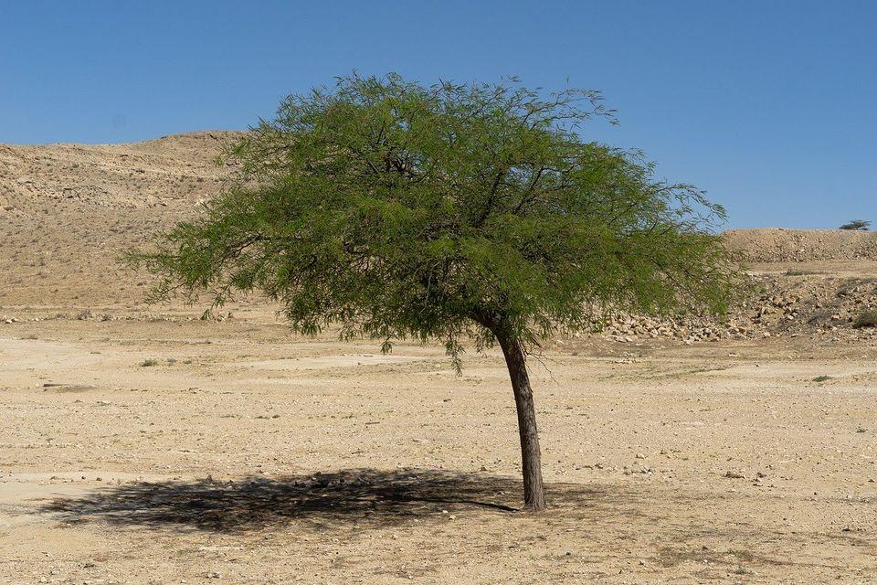 В пустыне Негев появится туристический комплекс