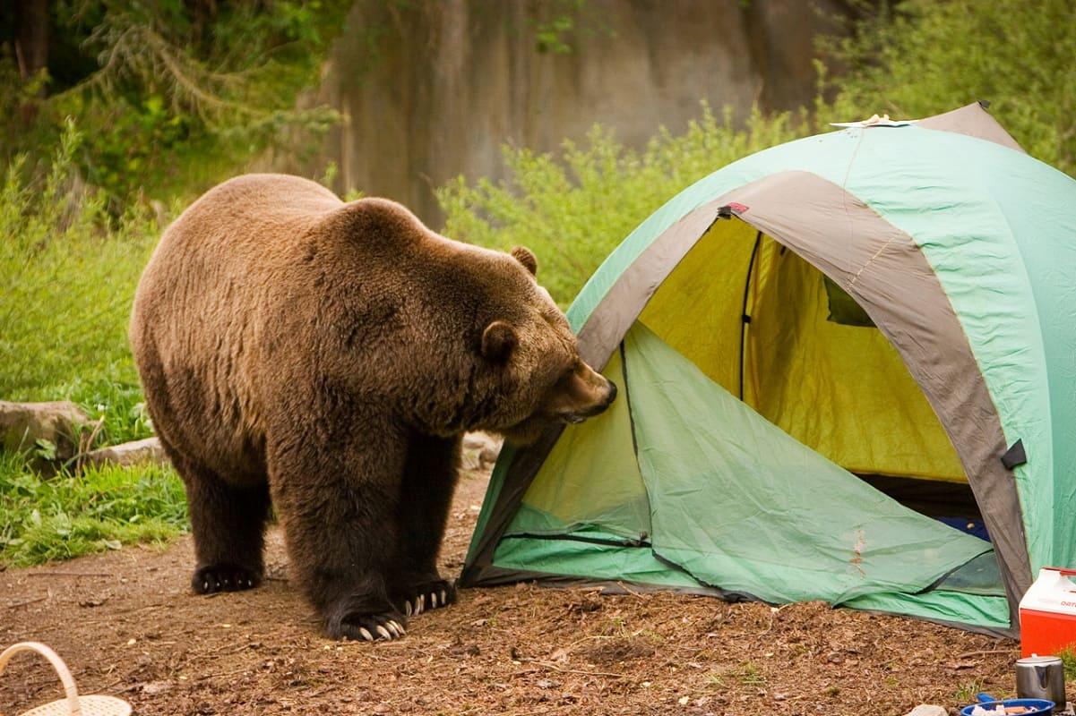 картинки медвежата в лесу с добрым утром сорока сотрудников