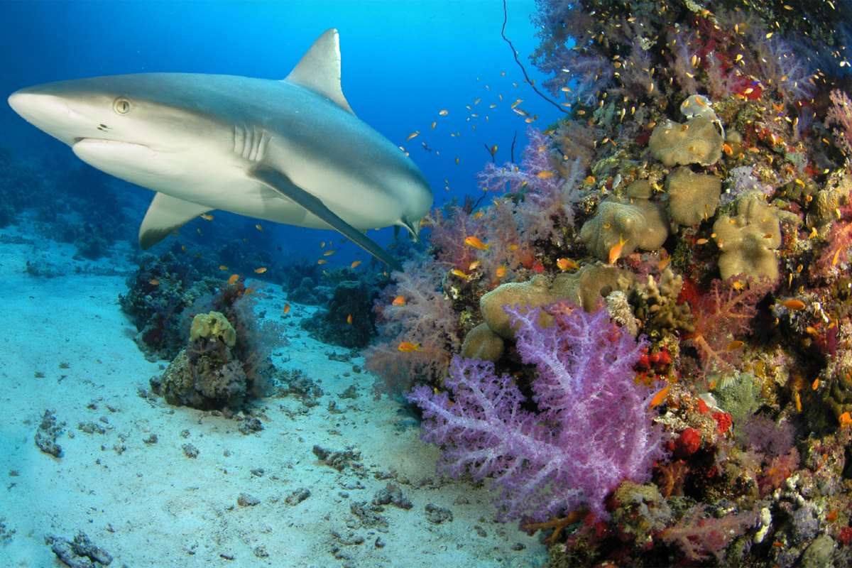 Подводный мир акулы фото